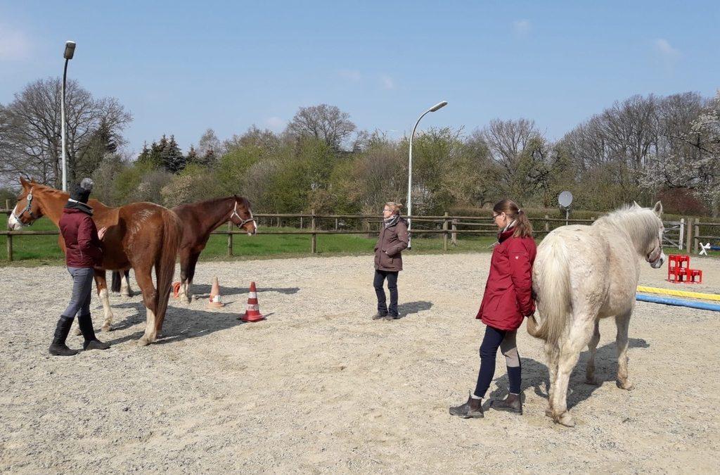 Was machen die Pferde beim Coaching