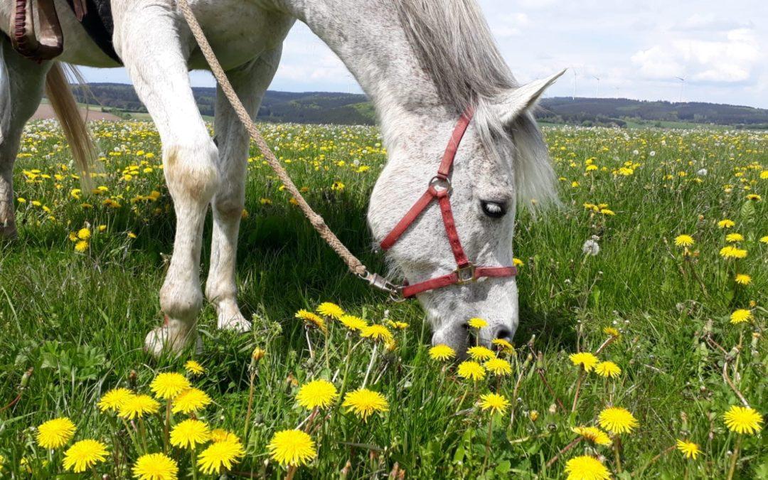 Pferde sehen DICH